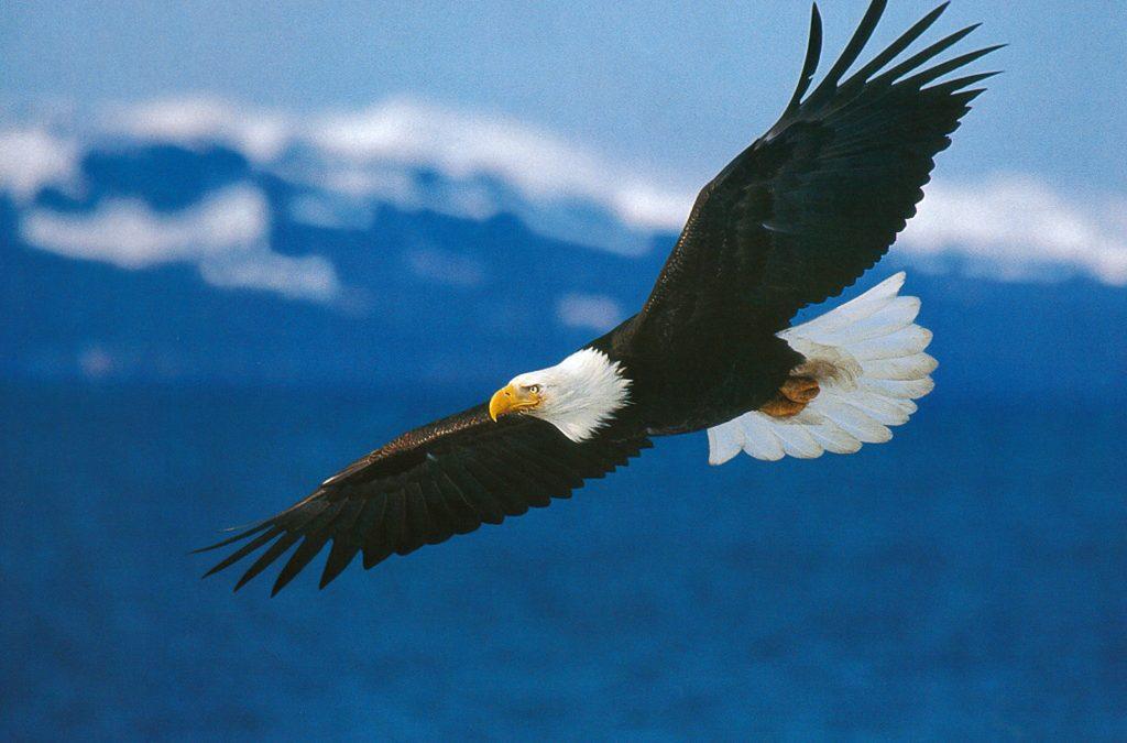 You are The Eagle