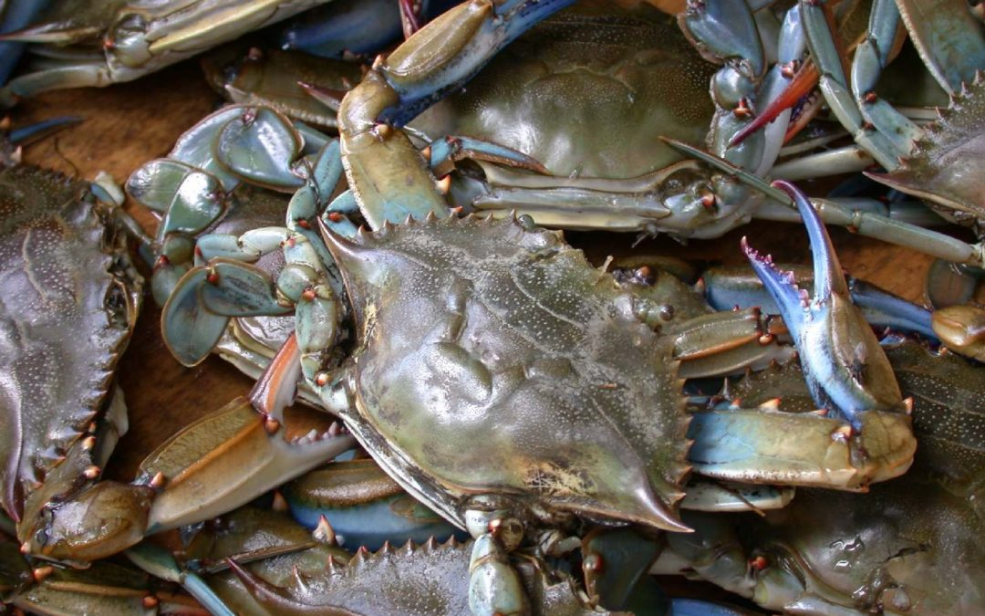 Crabbing Lessons