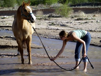 You can lead the horse to water…