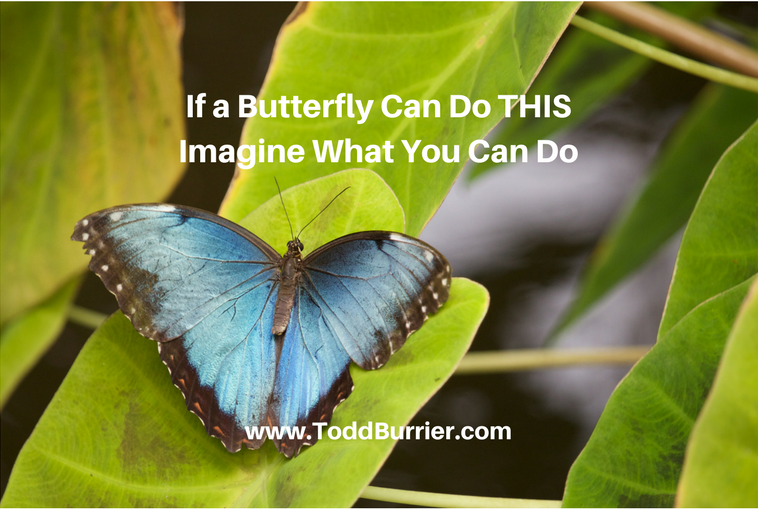 If a Butterfly Can Do THIS, Imagine What You Can Do