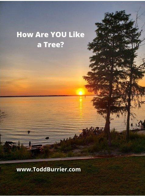 How Are YOU Like a Tree?