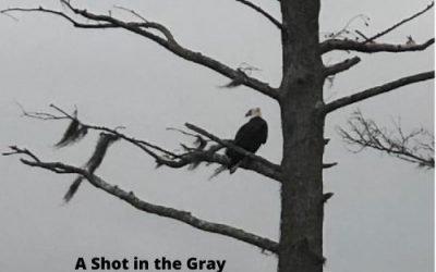 A Shot in the Gray Beats a Dream Hidden Away